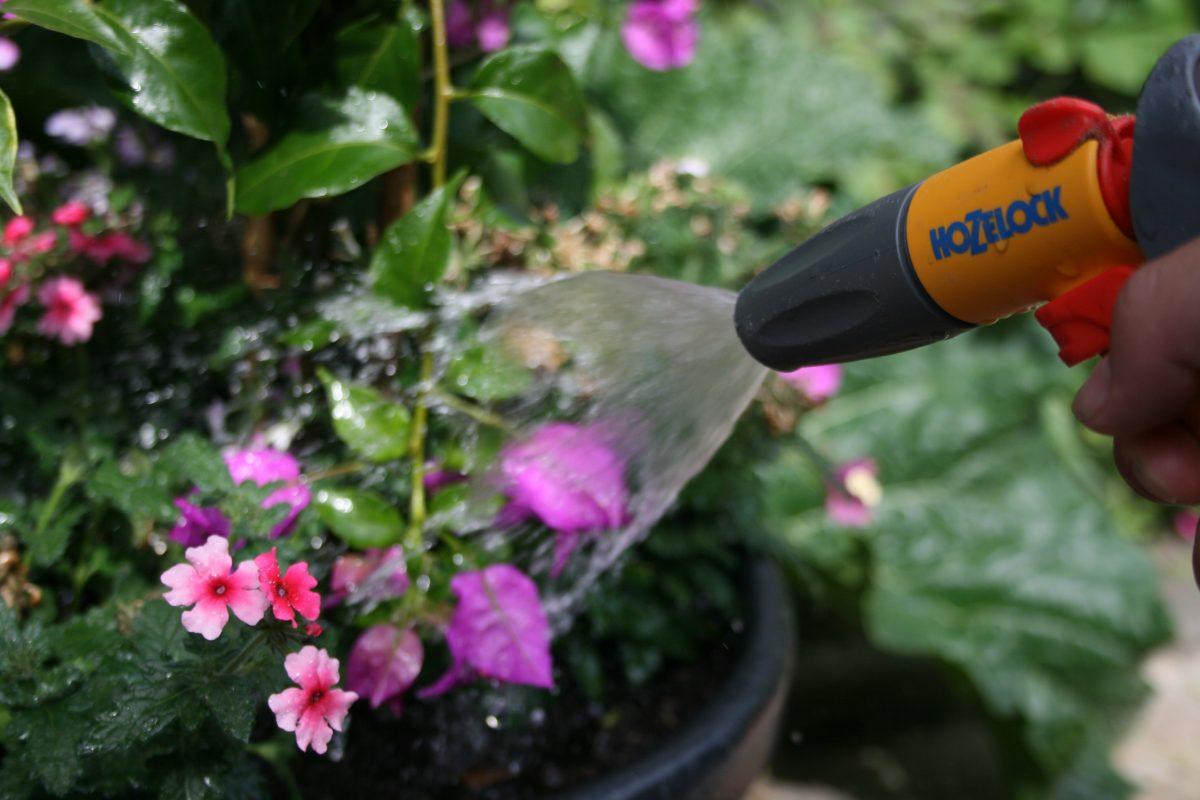 Hittegolf in de tuin.