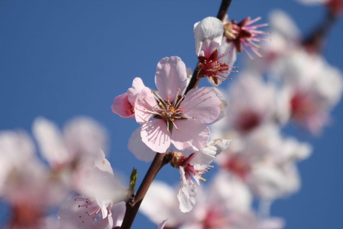 Tijd voor de voorjaarsbeurt!